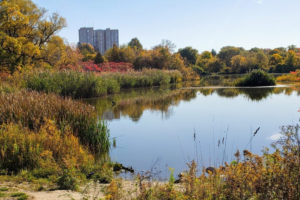 Humber Valley Pond, also known as Crang's Pond, behind the Rivermede Estate at Weston Road and Sheppard Avenue West